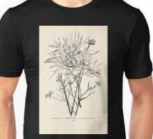 Southern wild flowers and trees together with shrubs vines Alice Lounsberry 1901 038 Sweet Fern Unisex T-Shirt
