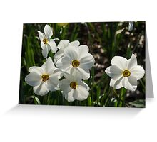 Sparkling, Fabulous White Narcissus with a Touch of Red Greeting Card