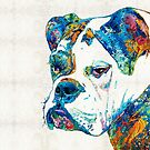 Colorful English Bulldog Art By Sharon Cummings by Sharon Cummings