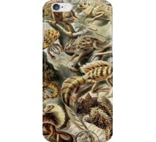 Historical nature art forms lizards iPhone Case/Skin