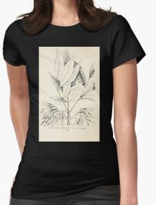 Southern wild flowers and trees together with shrubs vines Alice Lounsberry 1901 138 Green Ash Womens Fitted T-Shirt