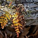 The Golden Fern by MotherNature