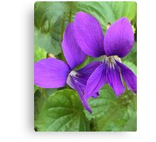 Violets A Bloomin' Canvas Print