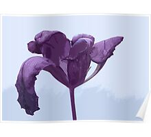Overblown Tulip 01a Poster