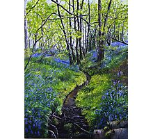 Bluebells and Brook Photographic Print