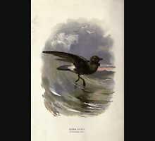 Familiar wild birds Swaysland 1883 V3 309 Storm Petrel Unisex T-Shirt