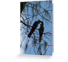 Black Cockatoos Preening Greeting Card