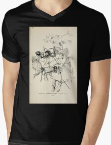 Southern wild flowers and trees together with shrubs vines Alice Lounsberry 1901 057 Leather Flower Mens V-Neck T-Shirt
