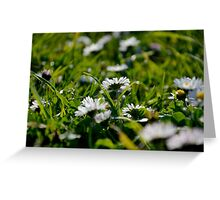 Daisy Flowers Greeting Card