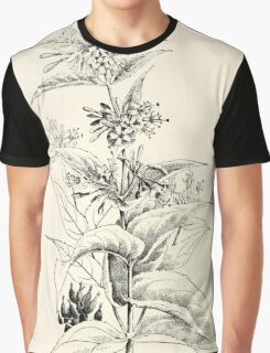 Southern wild flowers and trees together with shrubs vines Alice Lounsberry 1901 158 Honeysuckle Graphic T-Shirt