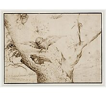 Hieronymus Bosch - The Owl S Nest 1505 Photographic Print
