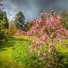 Sunlit Magnolia by vivsworld