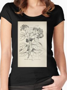 Southern wild flowers and trees together with shrubs vines Alice Lounsberry 1901 066 Decunaria Women's Fitted Scoop T-Shirt