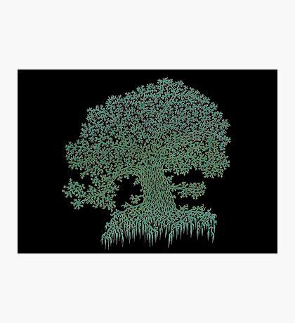 Green tree- grüner Baum Photographic Print