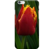 Cheerfully Wet Red and Yellow Tulips iPhone Case/Skin