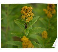 Wasp on a Flower (Homer, Alaska) Poster