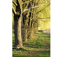 Weeping Willow Lane  Photographic Print