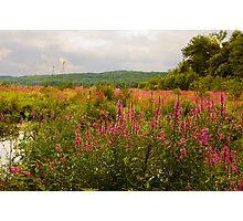 Walk Through a Meadow  Photographic Print