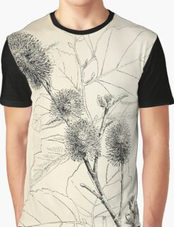 Southern wild flowers and trees together with shrubs vines Alice Lounsberry 1901 069 Fothergilla Graphic T-Shirt