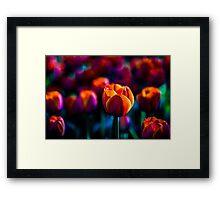 Red Tulip - Primus Inter Pares Framed Print