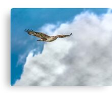 Hawk in the Clouds Canvas Print