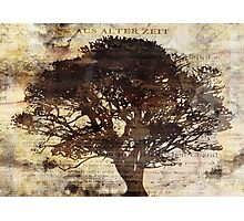 Trees sing of Time - Vintage 2 Photographic Print