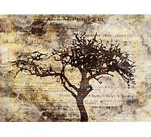 Trees sing of Time - Vintage 3 Photographic Print