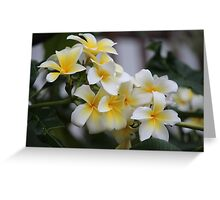 Beautiful Tropical Flowers 1 Greeting Card