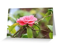 Spring Flower Greeting Card