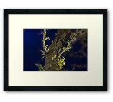 Street Lit Tree Framed Print