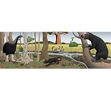Pleistocene Madagascar Photographic Print