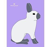 Blue Sable Point Rabbit Photographic Print