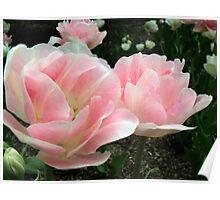 Pale Pink Petals Poster