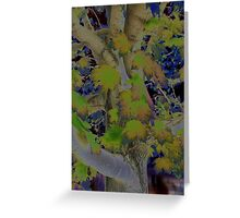 Maple Tree Greeting Card