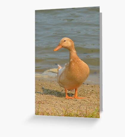 Got bread? Greeting Card