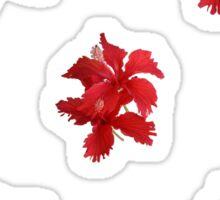 Red hybiscus flowers Sticker
