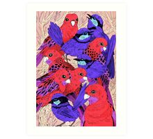 Wrens and Rosellas Delight! Art Print