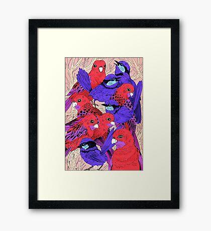 Wrens and Rosellas Delight! Framed Print