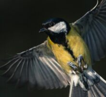 Great Tit on the wing Sticker