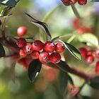 Berry Delight by Joy Watson