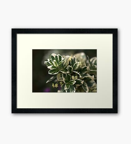 Variegated leaves Framed Print