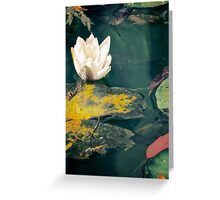 Waterlily in garden pond Greeting Card
