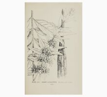Southern wild flowers and trees together with shrubs vines Alice Lounsberry 1901 113 Swamp Loostrife One Piece - Short Sleeve