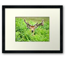 Hello Deer Framed Print