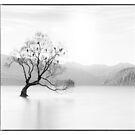Wanaka Tree by Margaret Metcalfe