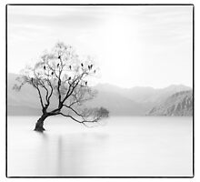 Wanaka Tree by Margaret Metcalfe