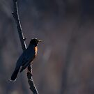 Signs of Spring - Robin by Jim Cumming