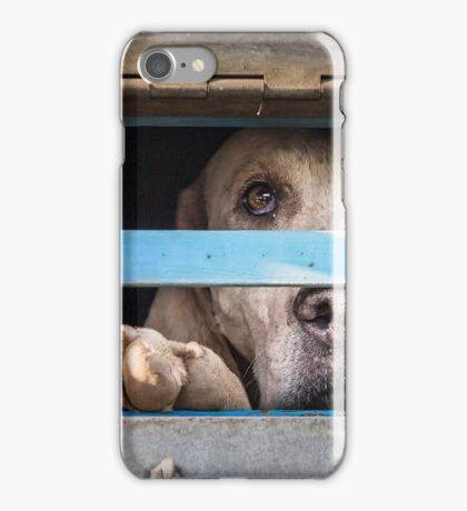 Foxhound looking out of trailer iPhone Case/Skin