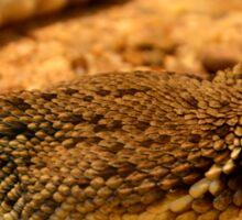 desert rattle snake Sticker