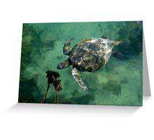Galapagos Green Sea Turtle Greeting Card